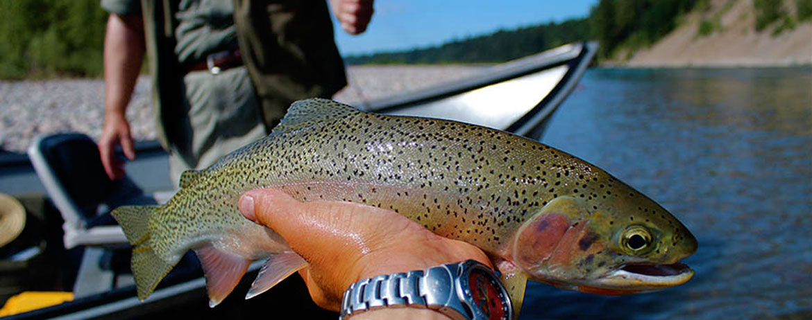 Montana fishing trips wild river adventures for Montana fishing trips